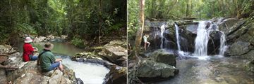 Rainforest Stream and Waterfall at Rose Gums Wilderness Retreat