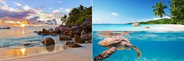 Seychelles beaches & Hawksbill turtle