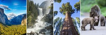 Sights of Yosemite & Sequoia National Parks