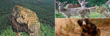 Sigiriya Rock aerial view & Minneriya wildlife