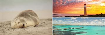 Sleeping seal pup, lighthouse at sunset and Vivonne Bay jetty on Kangaroo Island