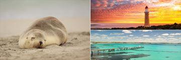 Sleeping seal pup, lighthouse at sunset and Vivonne Bay jetty on Kangaroo Island
