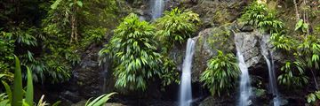 Rainforest waterfalls in Tobago