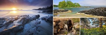 Tofino Landscapes, Bears & Pacific Rim National Park