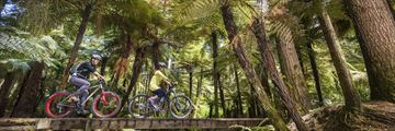 Whakarewarewa Forest, Rotorua