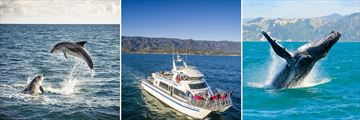 Wildlife Cruise Sights, Southern California