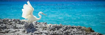 White heron on Cozumel beach