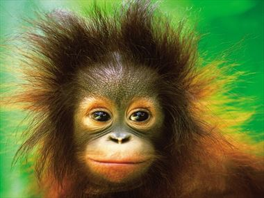 A beginner's guide to Borneo