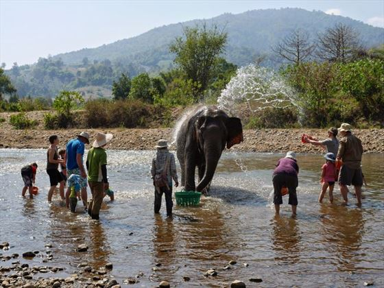 Elephant Bathing at Elephant Nature Park, Chiang Mai