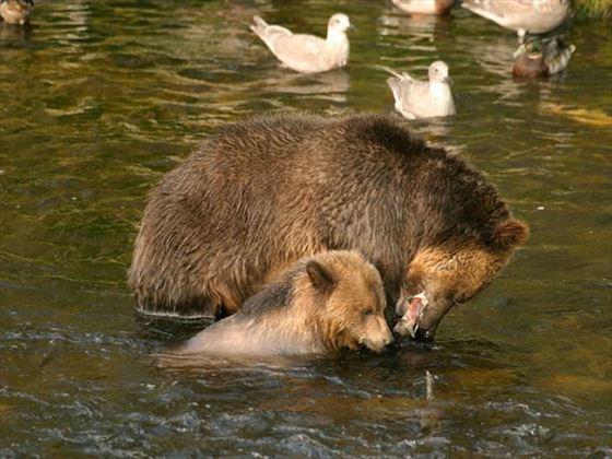 Spot the bears!