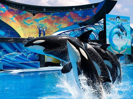 One Ocean at SeaWorld Orlando