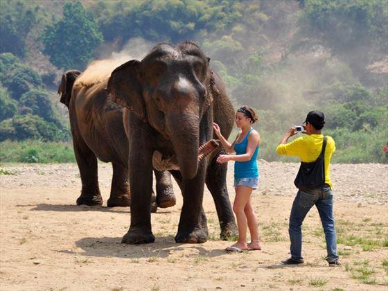Walking with Elephants at Elephant Nature Park
