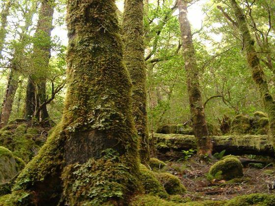 Abel Tasman forest