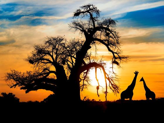Spend time enjoying a true African sunset