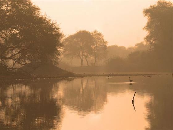 Bharatpur wetlands