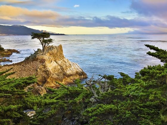 Cypress Tree on 17 mile drive, California coast