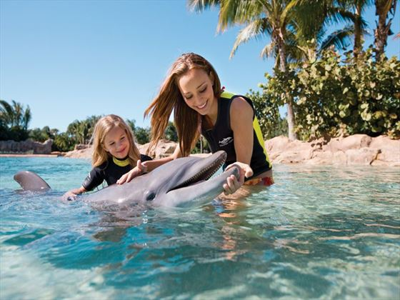 Dolphin Interation at Discovery Cove® Orlando