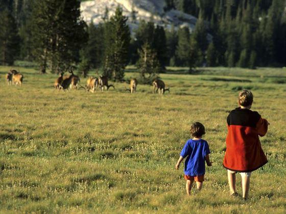 Deer spotting in the meadows of Yosemite