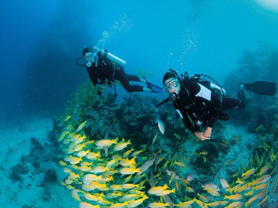 Divers surrounded by tropical fish