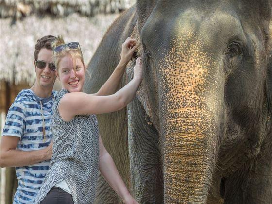 Help care for the Elephants - Elephant Hills, Khao Sok National Park