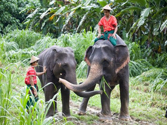 Asian elephants in the rainforest
