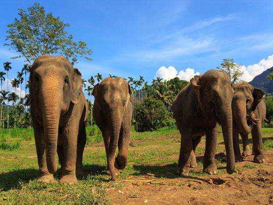 The resident elephants at Elephant Hills