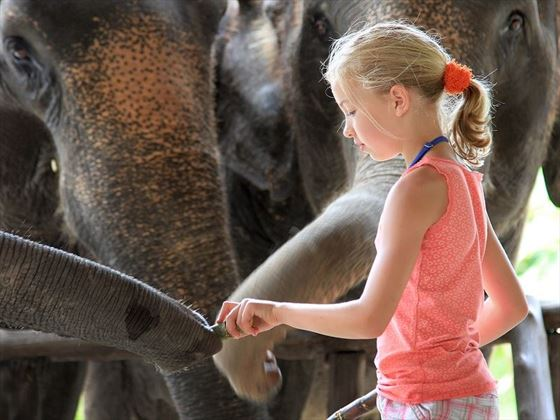 Young girl feeding elephants at Elephant Hills, Khao Sok