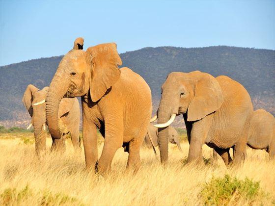 The Nyeri landscape with elephants roaming