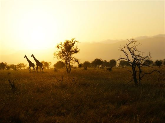 Horizon over Tsavo National Park