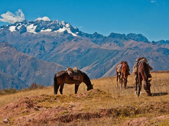 Horses by the mountains in Peru