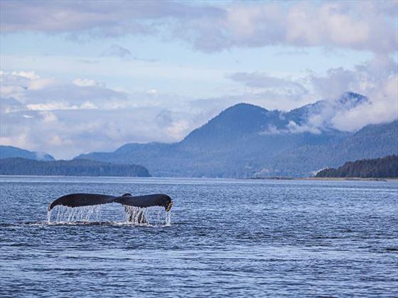 Humpback near Juneau, Alaska
