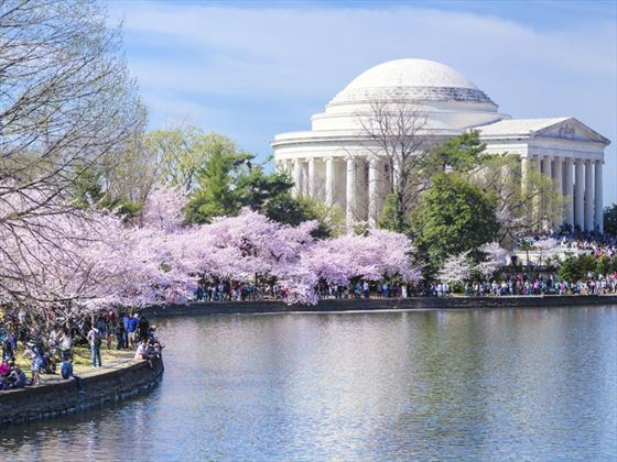 Jefferson Memorial and cherry blossom