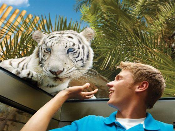 Jungala at Busch Gardens® Tampa Bay