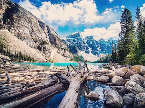 Logs at Moraine Lake, Banff National Park