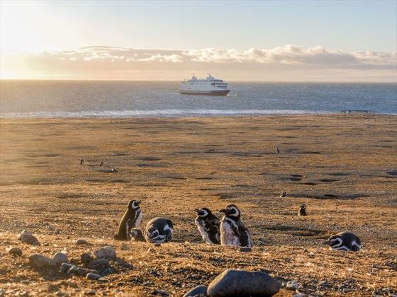Magdelana Island Penguins & Cruise Ship