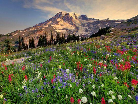 Mount Rainier, Yakima