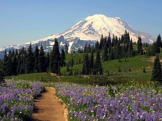 Mt Rainier Natinal Park - Deby Dixon