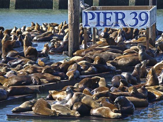 Pier 39, Fisherman's Wharf