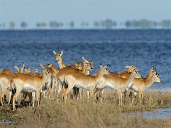 See amazing wildlife sightings, such as those at Chobe National Park