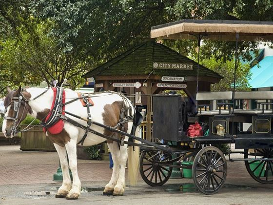 Savannah tourist horse cart