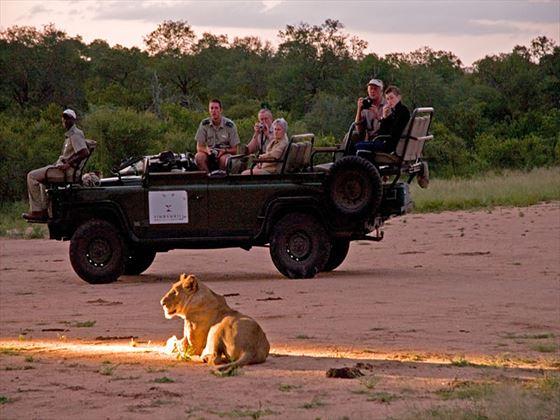 Simbambili Game Lodge lion