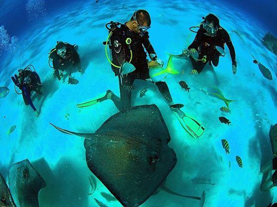 Scuba divers in Stingray City