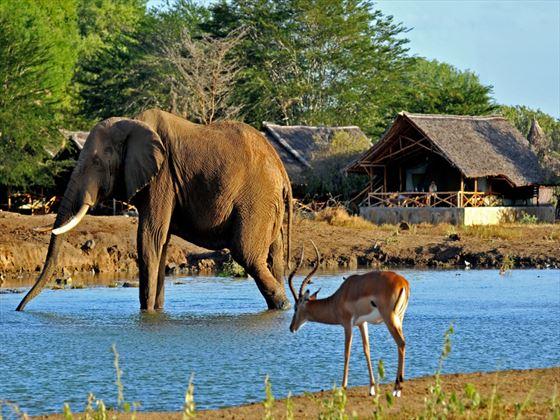 Surrounding wildlife at Satao Camp