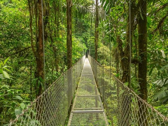 Suspended Bridge Walk in the Monteverde Cloud Forest, Costa Rica