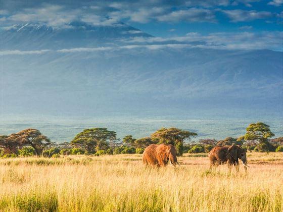 The plains surrounding Mount Kilimanjaro