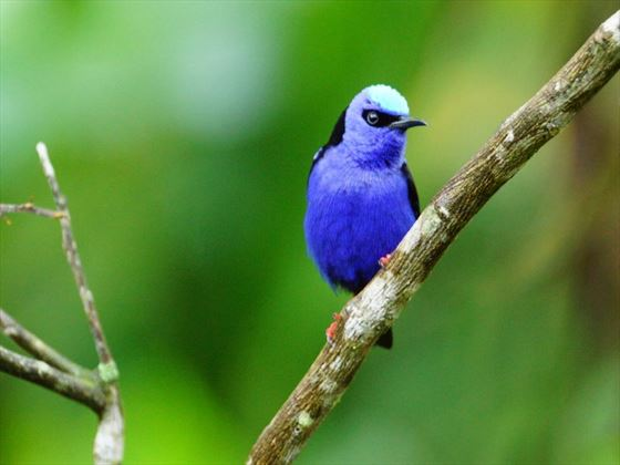 Tropical Birdlife in Costa Rica