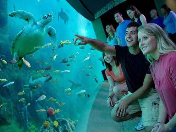 Turtle Trek at SeaWorld® Orlando