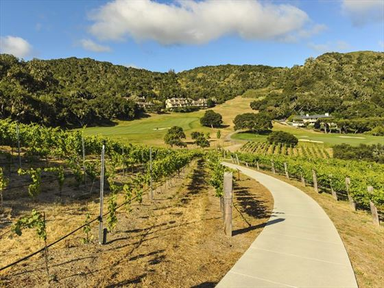 Vineyard in the hills of Carmel and Monterey