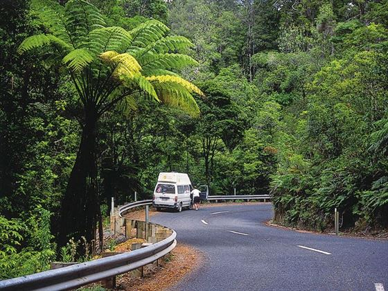 Driving through the Waipoua Forest