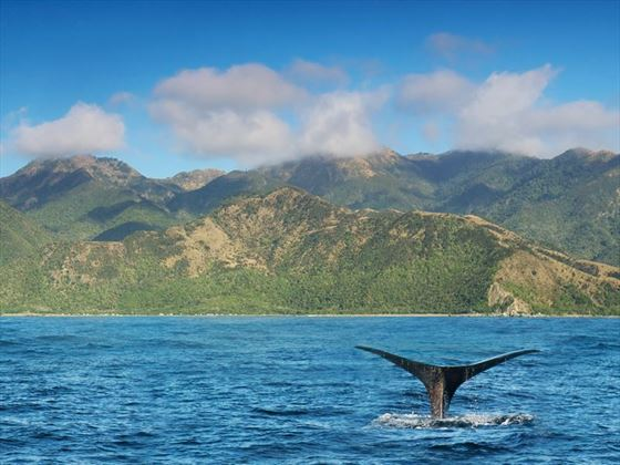 Whale watching in the waters of the Kaikoura coastline